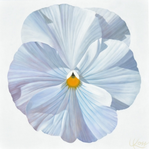 Pansy 11 (Patti's Flower), 24x24 (Sold)