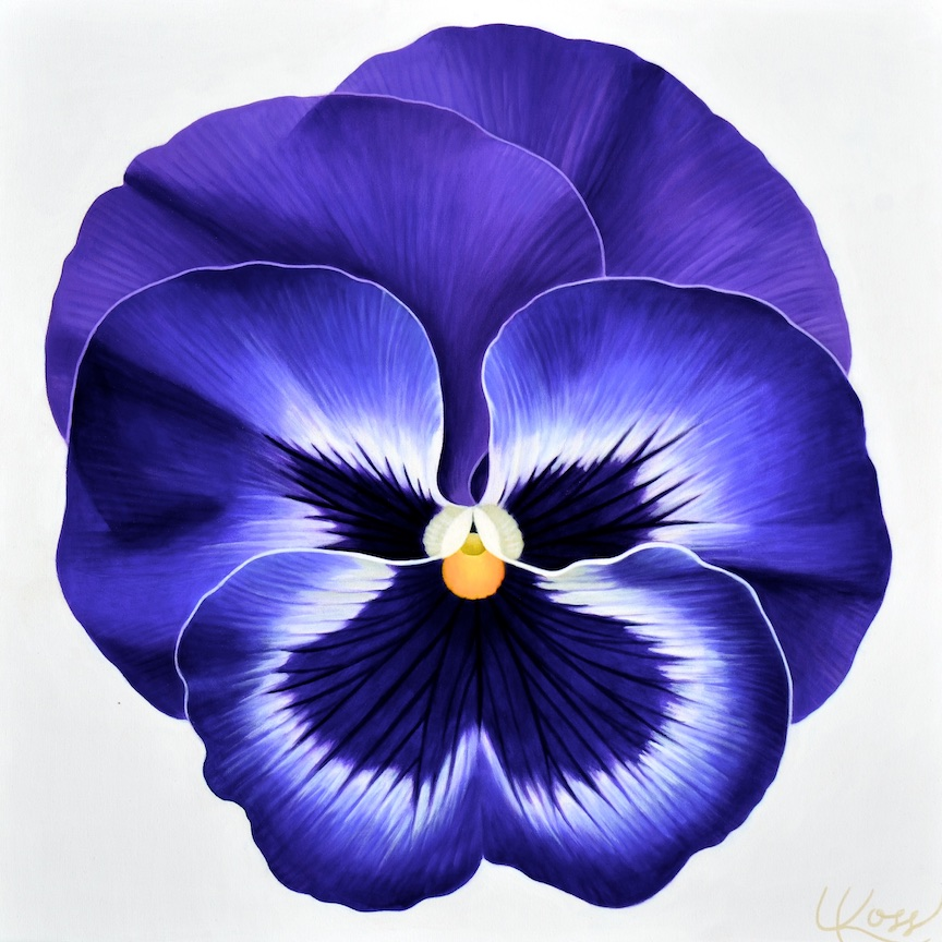 Pansy 18, 24x24