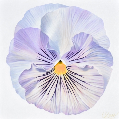 Pansy 3, 24x24