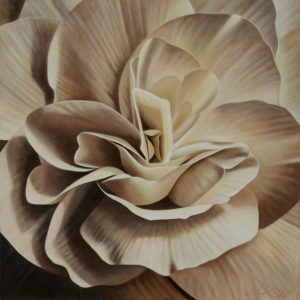 Begonia 9 | 24x24 acrylic on canvas by Canadian Artist, Laurie Koss who is known for her big flower (macro floral) paintings in neutral tones.