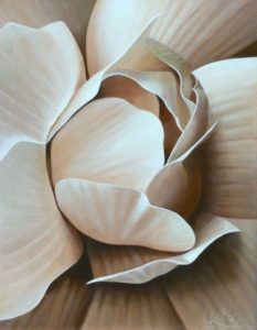 Begonia 12 | 18x14 acrylic on canvas by Canadian Artist, Laurie Koss who is known for her big flower (macro floral) paintings.