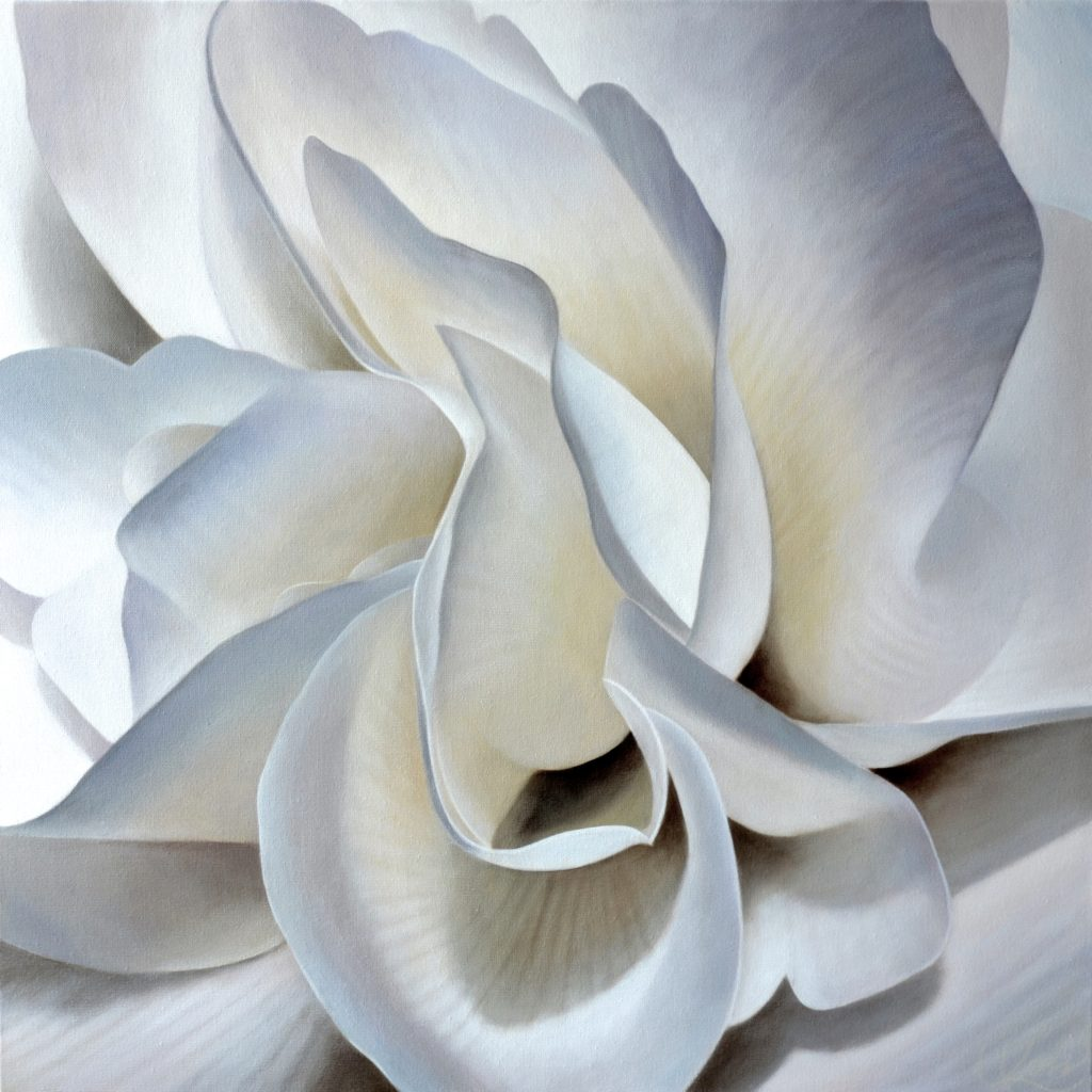 Begonia 19 | 24x24 acrylic on canvas by Canadian Artist, Laurie Koss who is known for her big flower (macro floral) paintings.
