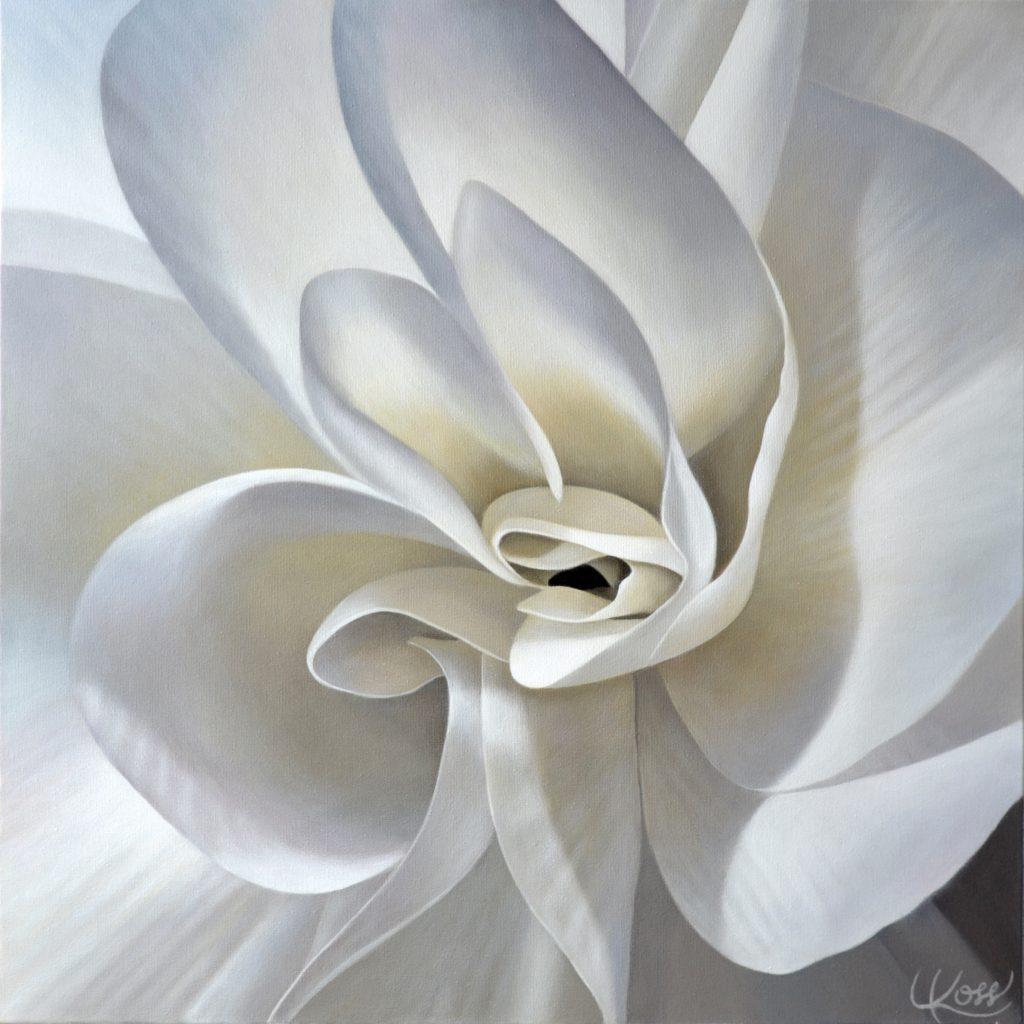 Begonia 20 | 24x24 acrylic on canvas by Canadian Artist, Laurie Koss who is known for her big flower (macro floral) paintings.