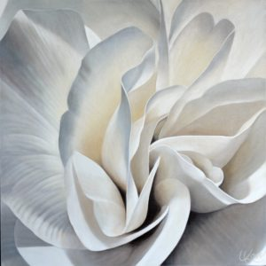 Begonia 21 | 24x24 acrylic on canvas by Canadian Artist, Laurie Koss who is known for her big flower (macro floral) paintings.