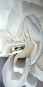 Begonia 22 | 30x60 acrylic on canvas by Canadian Artist, Laurie Koss who is known for her big flower (macro floral) paintings.