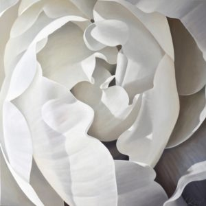 Begonia 28 | 36x36 acrylic on canvas by Canadian Artist, Laurie Koss who is known for her big flower (macro floral) paintings.