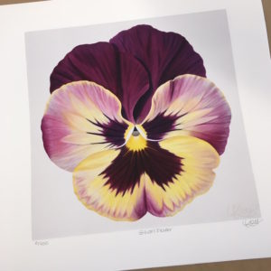 Picture of print of Gillian's Flower - Pansy for a Cause by Laurie Koss