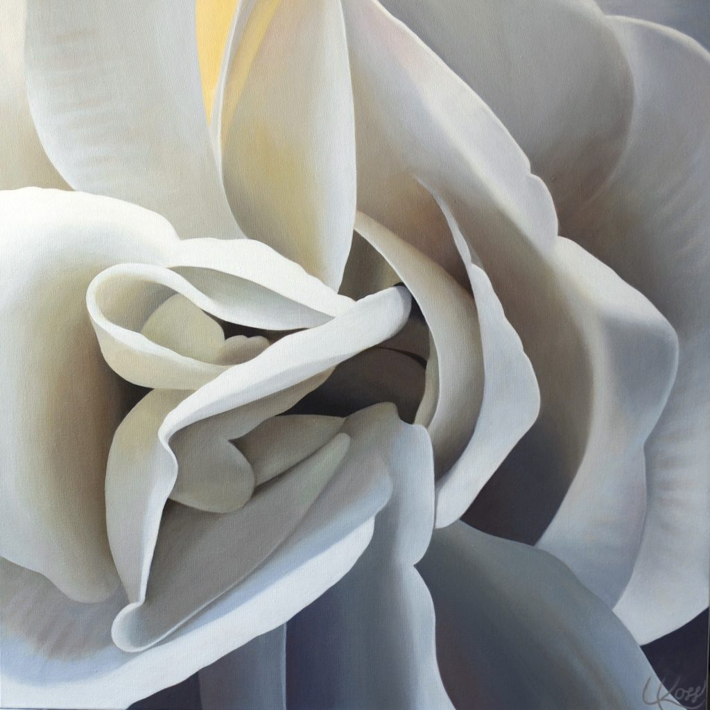 Begonia 26 | 24x24 acrylic on canvas by Canadian Artist, Laurie Koss who is known for her large, close-up, neutral coloured, flower paintings.