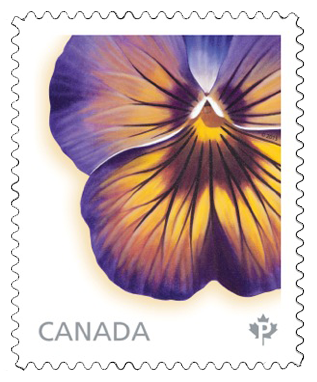 Midnight Glow Icicle Pansy Stamp by Laurie Koss