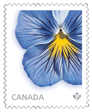 Delta Premium Pure Light Blue Pansy Stamp, painted by Laurie Koss for Canada Post