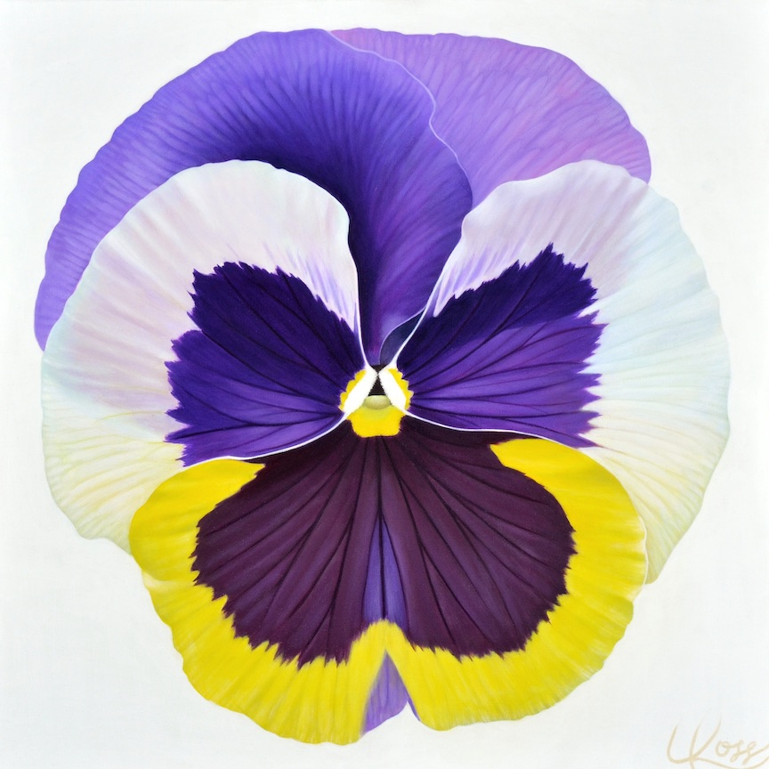 Pansy 12 | 24x24 acrylic on canvas by Canadian Artist, Laurie Koss who is known for her big flower (macro floral) paintings and her Pansy Stamps.