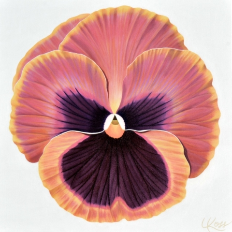Pansy 13, 24x24