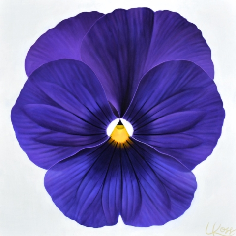 Pansy 14, 24x24