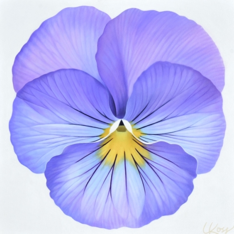 Pansy 16, 24x24