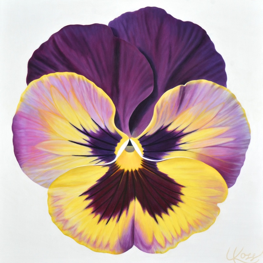 Pansy 17 | 24x24 acrylic on canvas by Canadian Artist, Laurie Koss who is known for her big flower (macro floral) paintings and her Pansy Stamps.
