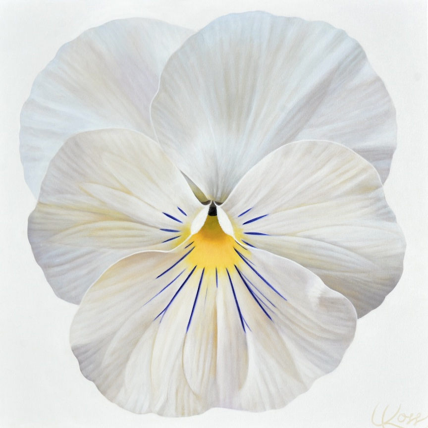 Pansy 19 | 24x24 acrylic on canvas by Canadian Artist, Laurie Koss who is known for her big flower (macro floral) paintings and her Pansy Stamps.