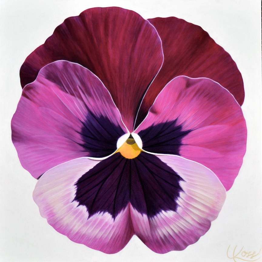 Pansy 20 | 24x24 acrylic on canvas by Canadian Artist, Laurie Koss who is known for her big flower (macro floral) paintings and her Pansy Stamps.