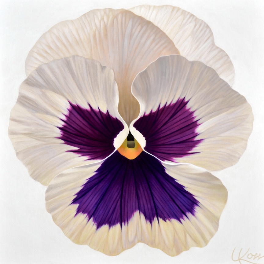 Pansy 21 | 24x24 acrylic on canvas by Canadian Artist, Laurie Koss who is known for her big flower (macro floral) paintings and her Pansy Stamps.
