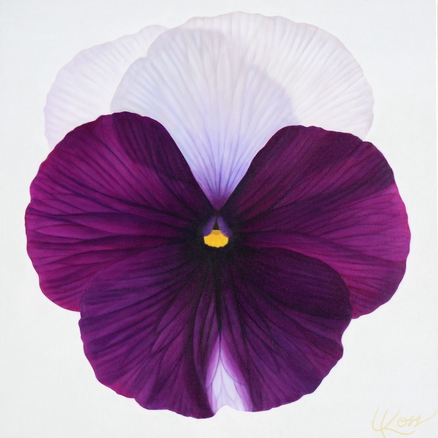 Pansy 5 | 24x24 acrylic on canvas by Canadian Artist, Laurie Koss who is known for her big flower (macro floral) paintings and her Pansy Stamps.