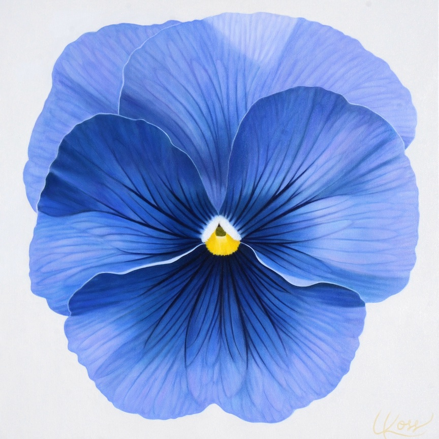 Pansy 7 | 24x24 acrylic on canvas by Canadian Artist, Laurie Koss who is known for her big flower (macro floral) paintings and her Pansy Stamps.
