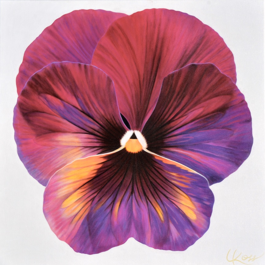 Pansy 8 | 24x24 acrylic on canvas by Canadian Artist, Laurie Koss who is known for her big flower (macro floral) paintings and her Pansy Stamps.
