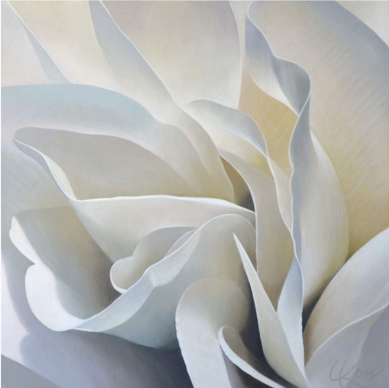 Begonia 30 | 24x24 acrylic on canvas by Canadian Artist, Laurie Koss who is known for her big flower (macro floral) paintings.