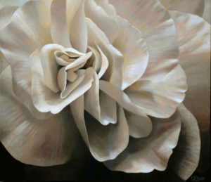 Begonia 2 | 26x30 acrylic on canvas by Canadian Artist, Laurie Koss who is known for her big flower (macro floral) paintings in neutral tones.