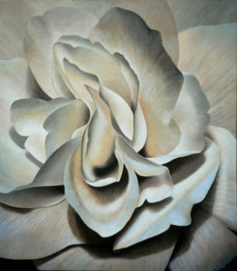 Begonia 5   34x30 acrylic on canvas by Canadian Artist, Laurie Koss who is known for her big flower (macro floral) paintings in neutral tones.