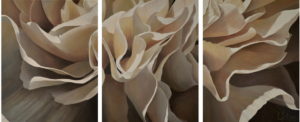 Carnation 21 | 20x48 triptych acrylic on canvas by Canadian Artist, Laurie Koss who is known for her big flower (macro floral) paintings in neutral tones.