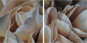 Carnation 22 | 24x48 diptych acrylic on canvas by Canadian Artist, Laurie Koss who is known for her big flower (macro floral) paintings in neutral tones.
