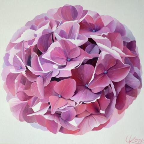 Hydrangea 1, 24x24 (Sold)