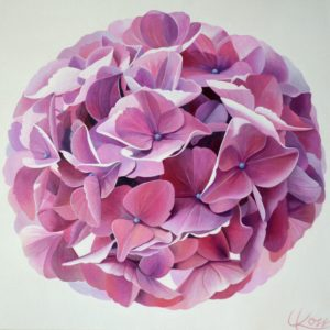 Hydrangea 1 | 24x24 acrylic on canvas by Canadian Artist, Laurie Koss who is known for her big flower (macro floral) paintings in neutral tones.