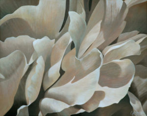 Peony 3   24x30 acrylic on canvas by Canadian Artist, Laurie Koss who is known for her big flower (macro floral) paintings in neutral tones.