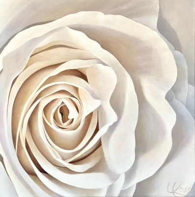 Rose 2 | 24x24 acrylic on canvas by Canadian Artist, Laurie Koss who is known for her big flower (macro floral) paintings.