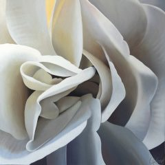 Begonia 26 | 24x24 acrylic on canvas by Canadian Artist, Laurie Koss who is known for her big flower (macro floral) paintings.