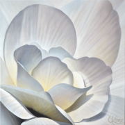Begonia 25 | 18x18 acrylic on canvas by Canadian Artist, Laurie Koss who is known for her big flower (macro floral) paintings.