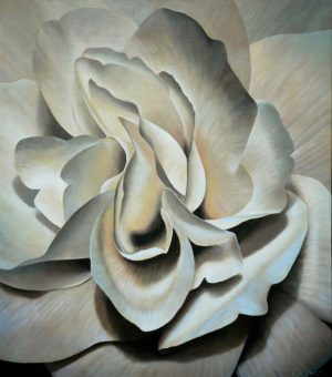 Begonia 5 | 34x30 acrylic on canvas by Canadian Artist, Laurie Koss who is known for her big flower (macro floral) paintings in neutral tones.