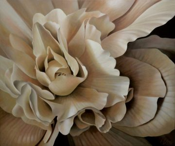 Begonia 8 | 30x36 acrylic on canvas by Canadian Artist, Laurie Koss who is known for her big flower (macro floral) paintings in neutral tones.
