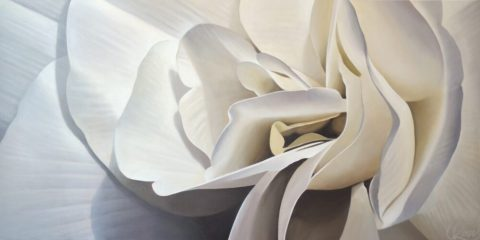 Begonia 24 | 24x48 acrylic on canvas by Canadian Artist, Laurie Koss who is known for her big flower (macro floral) paintings.